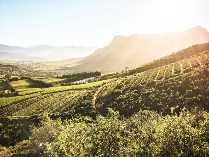 Cape Winelands Mountain biking Trails